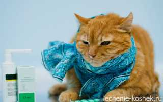 Почему кошка чихает – причины и лечение. Чихание у кошек, почему кошка часто чихает и у нее слезятся глаза.