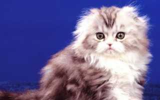 Имена и ключки для белых котят и котов мальчиков – как лучше назвать белого кота.