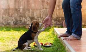 Как назвать Колли – список кличек для собак девочек и мальчиков.