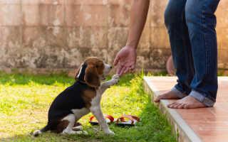 Красивые клички для собак девочек – интересные и самые красивые имена и клички собак девочек.