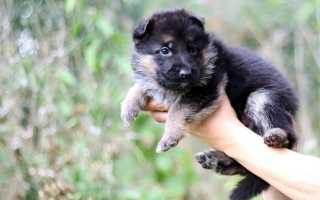 Немецкие клички для собак мальчиков и девочек (кобелей и сук)