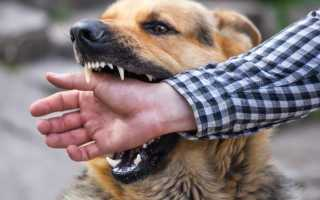 Укусы у собак. Что делать, если собаку укусило другое животное?