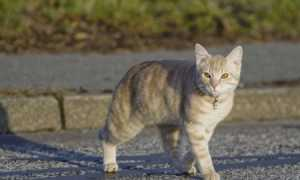 Что делать, если пропало животное? Как найти потерянных домашних животных?