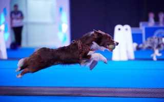Расписание выставок собак в Москве РКФ в 2020 году, календарь выставок собак в МСК