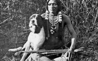 Как человек одомашнил собаку и кошек – как происходило одомашнивание собак и кошек.