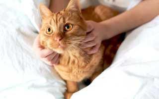 Высокая температура и лихорадка у кошки – причины и лечение.
