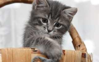 Клички для серых котов и кошек – более 300 имен для котенка мальчика и девочки