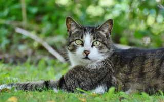 Хрипы у кошки при дыхании — причины и лечение
