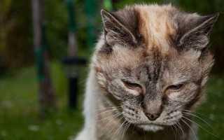 Протозойные болезни кошек:диагностика, признаки и лечение