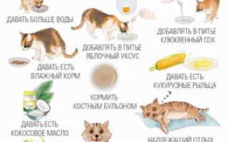 Как выбрать правильного котенка