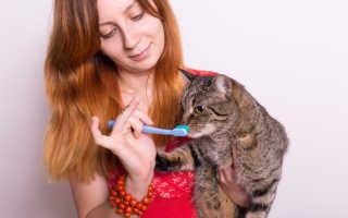 Чистка зубов у кошек – как почистить зубы питомцу?
