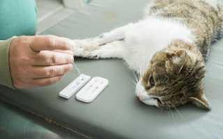 Удаление когтей у кошки – последствия и уход после операции