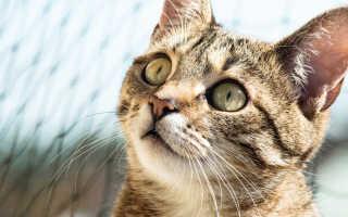 Острая рвота у кошек — причины, диагностика и лечение