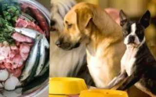 Домашняя еда для собак – как готовить еду для собак?