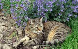Как справиться с дикими уличными кошками?