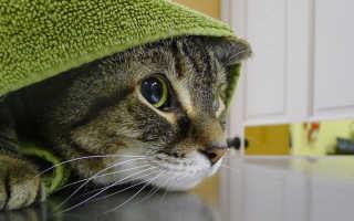 Стресс у кошек – причины и симптомы. Что делать и как снять стресс у кошки?