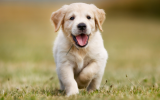Клички и имена для собак мальчиков. Собачьи имена и клички для собак мальчиков.