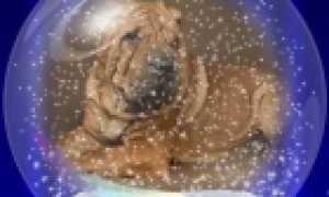 Выставки собак в Калининграде, расписание 2020 г.