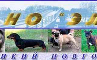 Выставки собак в Великом Новгороде, расписание 2020 г.
