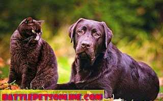 Сколько живут кошки и собаки – продолжительность жизни у кошек и собак.