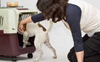 Как приучить щенка или собаку к клетке