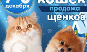Выставки собак в Воронеже – календарь на 2020 год, расписание с января по декабрь.