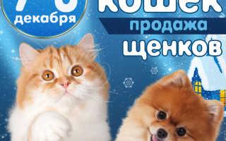 Выставки собак в Липецке – расписание на 2020 год по месяцам.